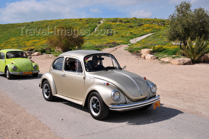 israel407: Beit Guvrin National Park, Yoav Region, South District: parade of classical Volkswagen Beetles - photo by M.Torres - (c) Travel-Images.com - Stock Photography agency - Image Bank