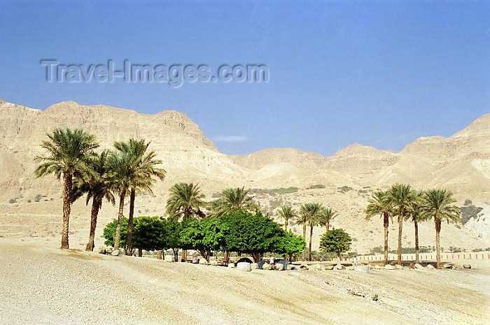 israel86: Israel - Negev desert: oasis - photo by J.Kaman - (c) Travel-Images.com - Stock Photography agency - Image Bank