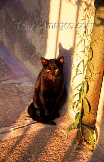 italy117: Italy - Murano (Veneto): a black cat enjoys the sunset - photo by W.Schipper - (c) Travel-Images.com - Stock Photography agency - Image Bank
