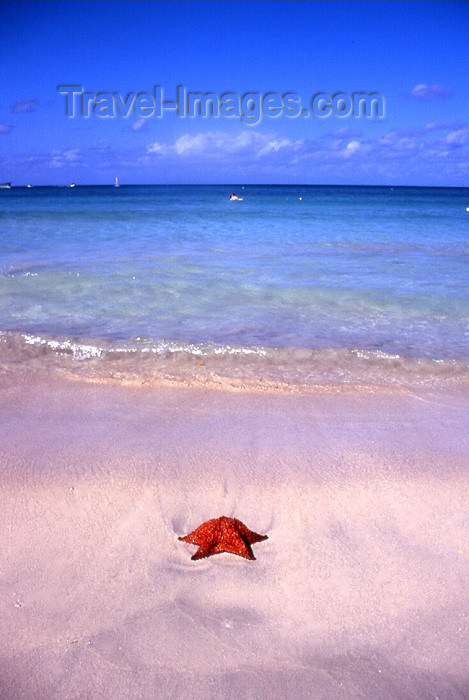 jamaica46: Jamaica - Negril - Westmoreland Parrish: starfish on the sand - Caribbean - Frommer's describes Negril as 'Jamaica's shrine to permissive indulgence' - photo by T.Brown - (c) Travel-Images.com - Stock Photography agency - Image Bank