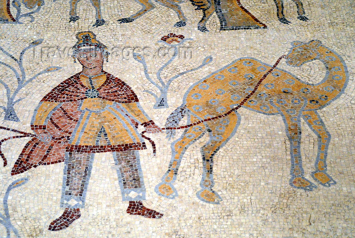 jordan117: Mount Nebo - Madaba governorate - Jordan:  Byzantine mosaic in the old diaconicon baptistery of the basilica - man with camel - photo by M.Torres - (c) Travel-Images.com - Stock Photography agency - Image Bank
