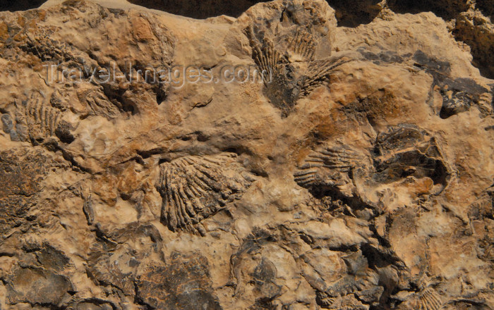 jordan144: Al Karak - Jordan: Crac des Moabites - Fossils in the castle's masonry - photo by M.Torres - (c) Travel-Images.com - Stock Photography agency - Image Bank