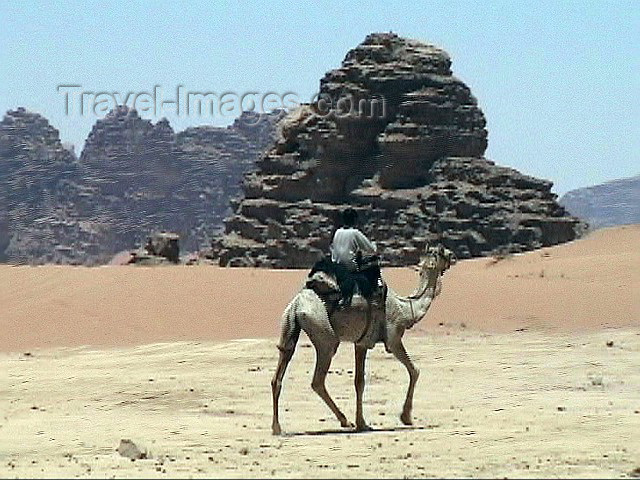 jordan9: Jordan - Wadi Rum: a bedouin on his camel - photo by A.Slobodianik - (c) Travel-Images.com - Stock Photography agency - Image Bank