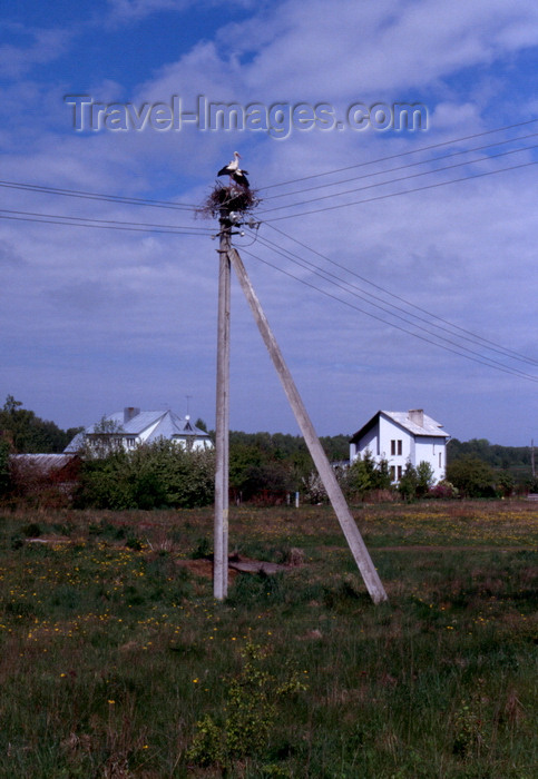 kaliningrad4: Courland spit, Kaliningrad Oblast, Russia: stork nest on a telephone pole - photo by A.Harries - (c) Travel-Images.com - Stock Photography agency - Image Bank