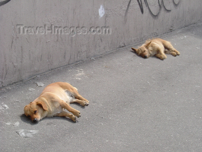 kaliningrad8: Kaliningrad / Königsberg, Russia: stray dogs bask in the sun / streunende Hunde in der Sonne - photo by P.Alanko - (c) Travel-Images.com - Stock Photography agency - Image Bank