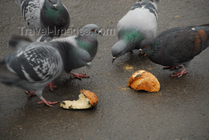 kazakhstan288: Kazakhstan, Almaty: 28 Panfilov Heroes' Park - pigeons - photo by M.Torres - (c) Travel-Images.com - Stock Photography agency - Image Bank