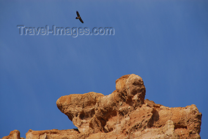kazakhstan76: Kazakhstan, Charyn Canyon: Valley of the Castles - a vulture above the gorge - photo by M.Torres - (c) Travel-Images.com - Stock Photography agency - Image Bank