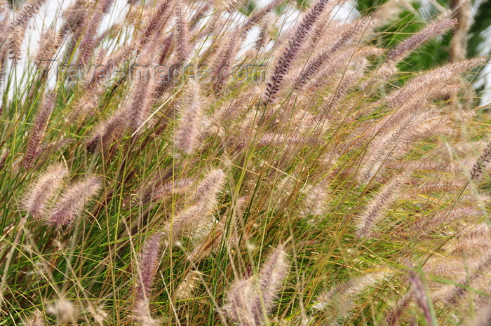 kenya162: Langata, Nairobi, Kenya: exotic grass at Mamba Village - photo by M.Torres - (c) Travel-Images.com - Stock Photography agency - Image Bank