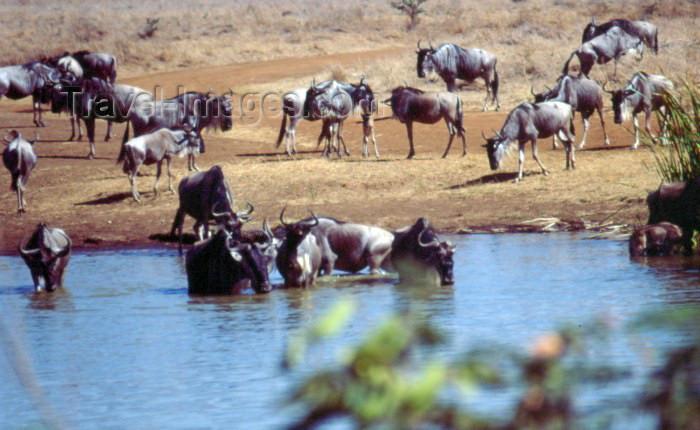 kenya31: Kenya - Nairobi National Park: animals at a water hole (photo by F.Rigaud) - (c) Travel-Images.com - Stock Photography agency - Image Bank