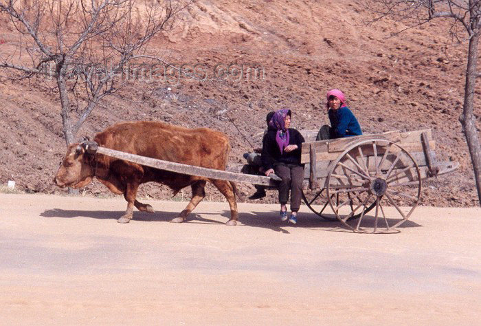 korean89: North Korea / DPRK - Chongju province: an up hill struggle - cart (photo by Miguel Torres) - (c) Travel-Images.com - Stock Photography agency - Image Bank