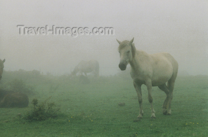 koreas50: Asia - South Korea - Jeju island / Cheju Island: horse in fog - photo by S.Lapides - (c) Travel-Images.com - Stock Photography agency - Image Bank
