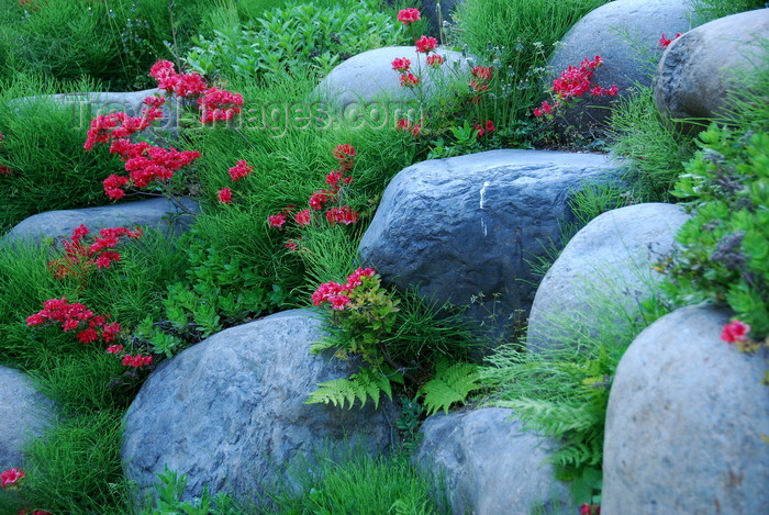 koreas78: Ulleungdo island,  North Gyeongsang Province, Korea: red flower rock garden - photo by M.Powell - (c) Travel-Images.com - Stock Photography agency - Image Bank