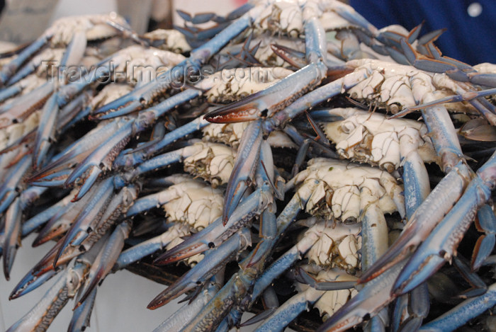 kuwait90: Kuwait city: fish market - crabs - photo by M.Torres - (c) Travel-Images.com - Stock Photography agency - the Global Image Bank