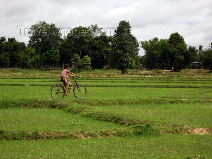 laos75: Laos - Don Det Island - Si Phan Don region - 4000 islands - Mekong river: bike in the fields - photo by M.Samper - (c) Travel-Images.com - Stock Photography agency - Image Bank