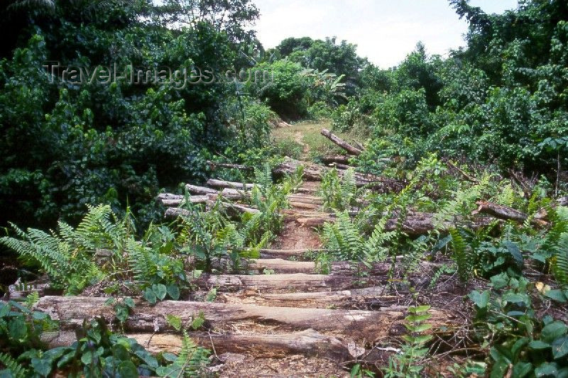 liberia22: Grand Bassa County, Liberia, West Africa: pedestrian bridge in the jungle - photo by M.Sturges - (c) Travel-Images.com - Stock Photography agency - Image Bank