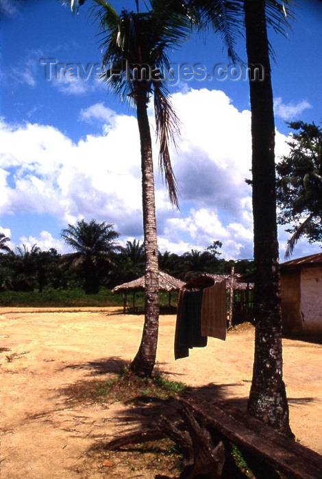 liberia32: Grand Bassa County, Liberia, West Africa: village and palms - photo by M.Sturges - (c) Travel-Images.com - Stock Photography agency - Image Bank