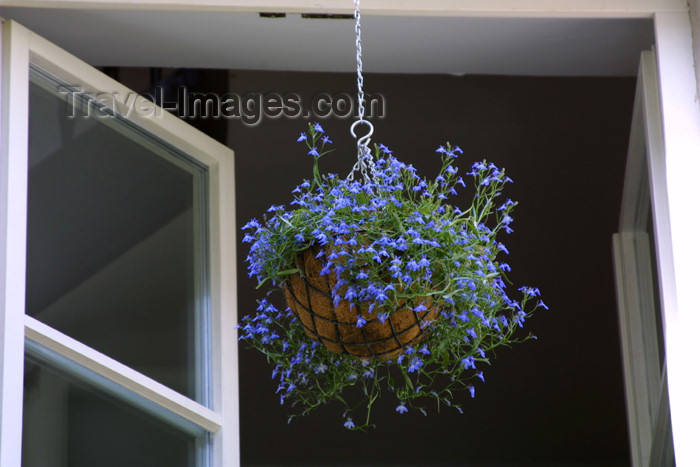 lithuania101: Lithuania - Vilnius: hanging vase - flowers - photo by A.Dnieprowsky - (c) Travel-Images.com - Stock Photography agency - Image Bank