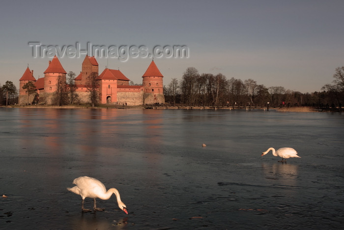 lithuania216: Trakai, Lithuania: Trakai Island Castle - swans on the ice - photo by A.Dnieprowsky - (c) Travel-Images.com - Stock Photography agency - Image Bank