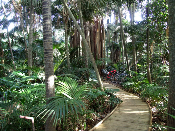 lord-howe7: Lord Howe island: meandering pathways lead through forest gardens to the beach - Kentia Palms and Banyan Trees - photo by R.Eime - (c) Travel-Images.com - Stock Photography agency - Image Bank