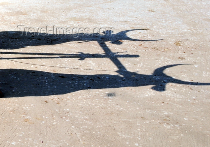 madagascar105: Morondava - Menabe, Toliara province, Madagascar: shadow of two oxen - photo by M.Torres - (c) Travel-Images.com - Stock Photography agency - Image Bank