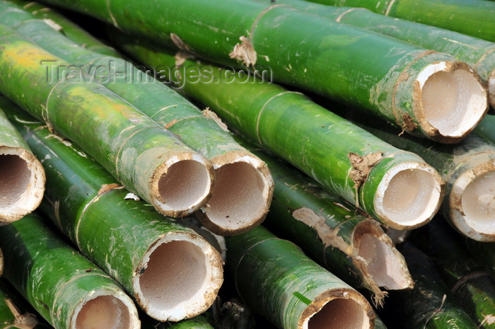 madagascar153: Soanierana Ivongo, Analanjirofo, Toamasina Province, Madagascar: bamboo at a construction site - traditional building material - photo by M.Torres - (c) Travel-Images.com - Stock Photography agency - Image Bank