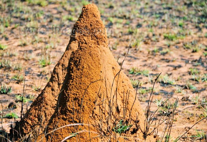 madagascar248: West coast road between the Manambolo river and Belon'i Tsiribihina, Toliara Province, Madagascar: termite mound - photo by M.Torres - (c) Travel-Images.com - Stock Photography agency - Image Bank