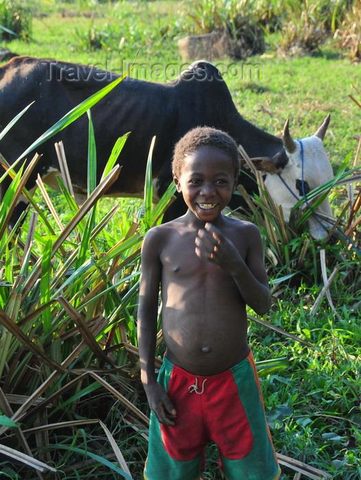 madagascar274: Bekopaka, Antsalova district, Melaky region, Mahajanga province, Madagascar: a boy and his zebu - photo by M.Torres - (c) Travel-Images.com - Stock Photography agency - Image Bank