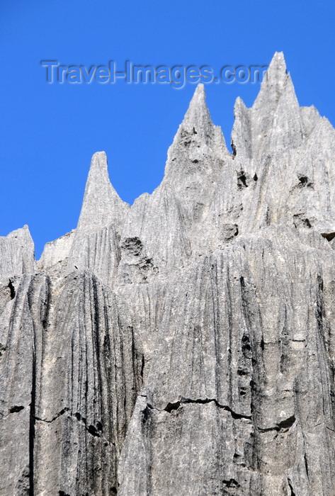 madagascar301: Tsingy de Bemaraha National Park, Mahajanga province, Madagascar: tree needles - karst limestone formation - UNESCO World Heritage Site - photo by M.Torres - (c) Travel-Images.com - Stock Photography agency - Image Bank