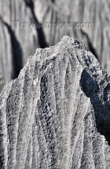 madagascar310: Tsingy de Bemaraha National Park, Mahajanga province, Madagascar: detail of a stone blade - karst limestone formation - UNESCO World Heritage Site - photo by M.Torres - (c) Travel-Images.com - Stock Photography agency - Image Bank