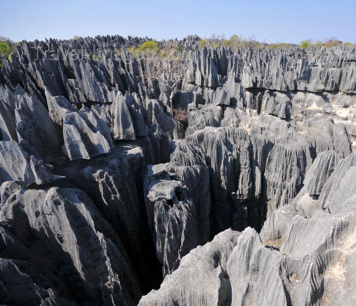 madagascar312: Tsingy de Bemaraha National Park, Mahajanga province, Madagascar: dense network of faults and crevices not for those with vertigo - karst topography - UNESCO World Heritage Site - photo by M.Torres - (c) Travel-Images.com - Stock Photography agency - Image Bank