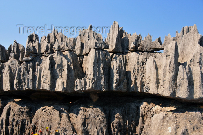madagascar317: Tsingy de Bemaraha National Park, Mahajanga province, Madagascar: layers of rock - karst limestone formation - UNESCO World Heritage Site - photo by M.Torres - (c) Travel-Images.com - Stock Photography agency - Image Bank