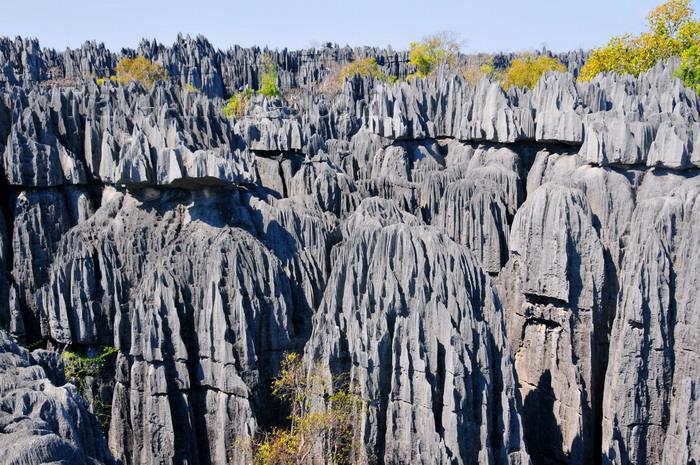 madagascar319: Tsingy de Bemaraha National Park, Mahajanga province, Madagascar: forest of limestone spikes - karstic  formation - UNESCO World Heritage Site - photo by M.Torres - (c) Travel-Images.com - Stock Photography agency - Image Bank
