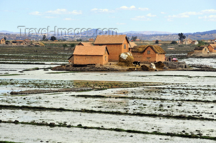 madagascar426: Antananarivo / Tananarive / Tana - Analamanga region, Madagascar: rice padies - houses on an islet - northern outskirts - rizieres aux alentours de la capitale - photo by M.Torres - (c) Travel-Images.com - Stock Photography agency - Image Bank