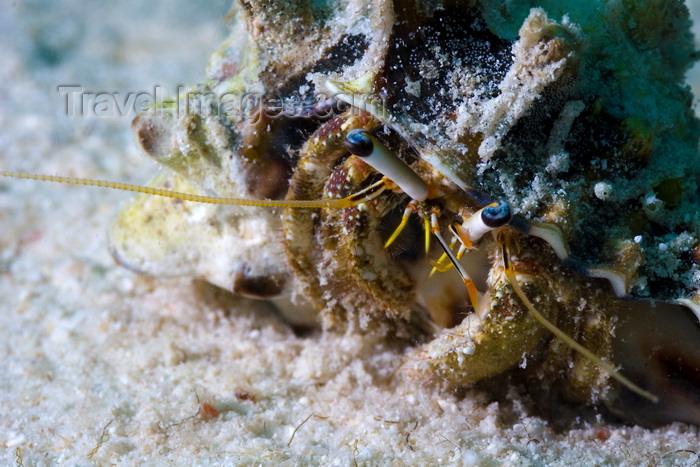 mal-u275: Mabul Island, Sabah, Borneo, Malaysia: Hermit Crab on the sand - photo by S.Egeberg - (c) Travel-Images.com - Stock Photography agency - Image Bank