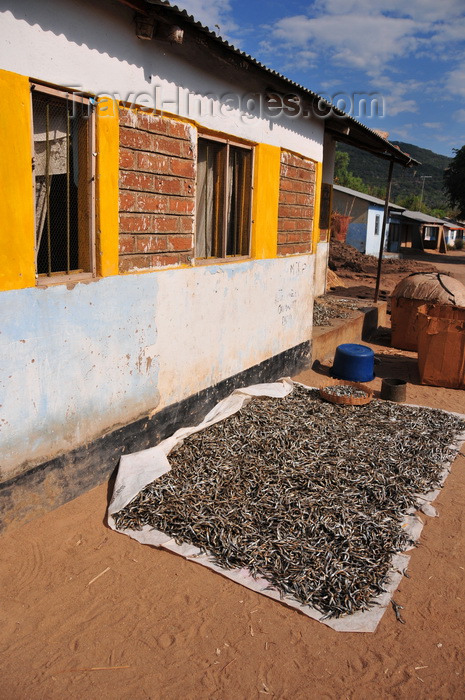 malawi86: Cape Maclear / Chembe, Malawi: lake sardines / Usipa fish drying under the sun near a house - Engraulicypris sardella, pelagic species that occurs in shoals both near the shore and far out in the lake - photo by M.Torres - (c) Travel-Images.com - Stock Photography agency - Image Bank
