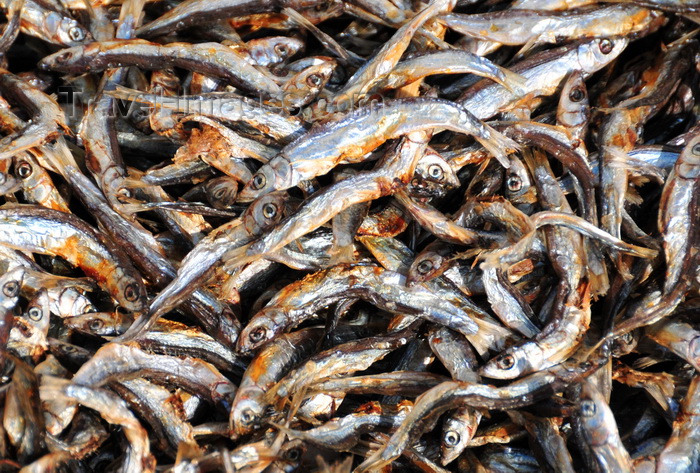 malawi87: Cape Maclear / Chembe, Malawi: Usipa / lake sardines, a cyprinid fish, drying on cane racks, Sun-Dried Fish known as Nsomba Zowuma - Engraulicypris sardella - photo by M.Torres - (c) Travel-Images.com - Stock Photography agency - Image Bank
