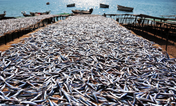 malawi88: Cape Maclear / Chembe, Malawi: lake sardines aka Usipa fish drying on cane racks on the banks of Lake Malawi - Engraulicypris sardella - fishing and tourism coexist in the busiest resort on Lake Malawi - photo by M.Torres - (c) Travel-Images.com - Stock Photography agency - Image Bank