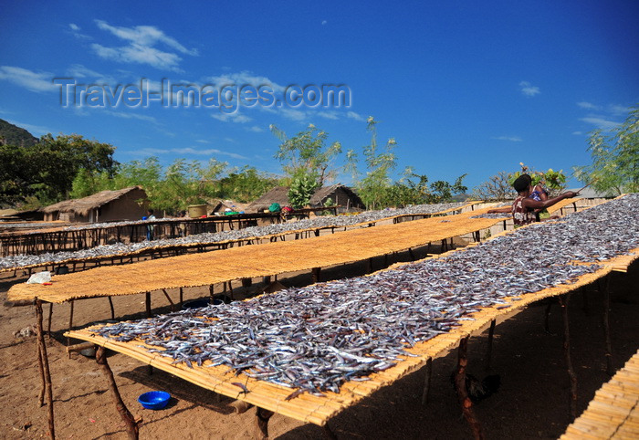 malawi94: Cape Maclear / Chembe, Malawi: drying fish over long mats - Usipa fish / lake sardines, Engraulicypris sardella - photo by M.Torres - (c) Travel-Images.com - Stock Photography agency - Image Bank