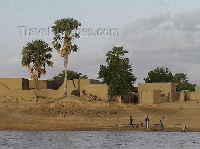 mali1: Mali - River Niger - Tombouctou region: mud houses under the palm trees - photo by A.Slobodianik - (c) Travel-Images.com - Stock Photography agency - Image Bank