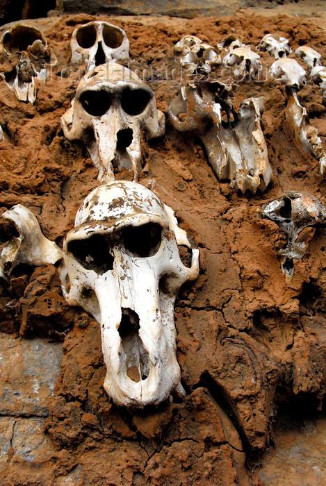 mali79: Bandiagara Escarpment, Dogon country, Mopti region, Mali: monkey skulls set into a building as hunting trophies - photo by J.Pemberton - (c) Travel-Images.com - Stock Photography agency - Image Bank