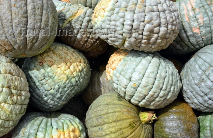 mauritania19: Nouakchott, Mauritania: heap of green and wrinkled pumpkins at the Moroccan Market aka Socogim market - photo by M.Torres - (c) Travel-Images.com - Stock Photography agency - Image Bank