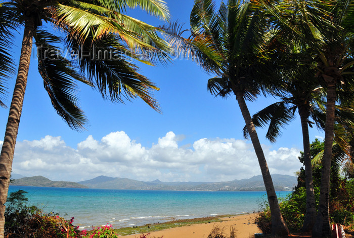 mayotte49: Pamandzi, Petite-Terre, Mayotte: beach and coconut trees - ilôt M'Bouzi and Mahoré island in the background - photo by M.Torres - (c) Travel-Images.com - Stock Photography agency - Image Bank