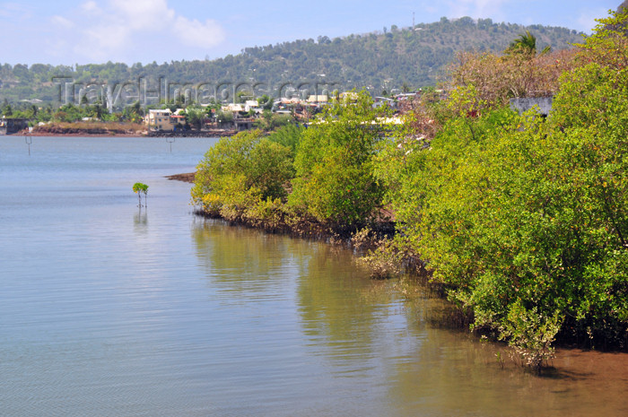mayotte61: Dzaoudzi, Petite-Terre, Mayotte: mangroves - Vasière des Badamiers mangal - photo by M.Torres - (c) Travel-Images.com - Stock Photography agency - Image Bank