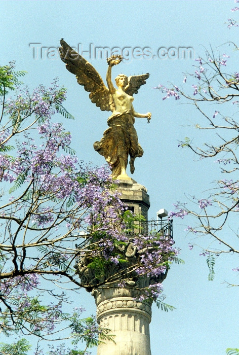 mexico10: Mexico City: the Angel of Independence / memorias de Berlin - El Angel de la Independencia - Paseo de la Reforma - photo by M.Torres - (c) Travel-Images.com - Stock Photography agency - Image Bank