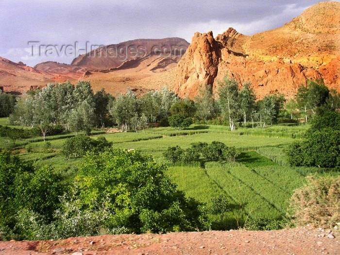 moroc288: Morocco / Maroc - Dades gorge: green fields - photo by J.Kaman - (c) Travel-Images.com - Stock Photography agency - Image Bank