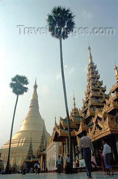 myanmar180: Myanmar / Burma - Yangon / Rangoon: Shwedagon pagoda - palmtrees by the temple - Buddhism - religion - Asia (photo by J.Kaman) - (c) Travel-Images.com - Stock Photography agency - Image Bank