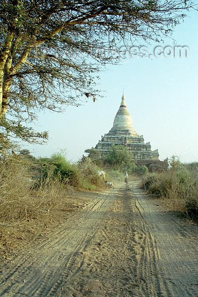 myanmar3: Myanmar / Burma - Bagan / Pagan (Mandalay division): dirt road leading to Shwe-san-daw pagoda - zedi - stupa - religion - Buddhism (J.Kaman) - (c) Travel-Images.com - Stock Photography agency - Image Bank
