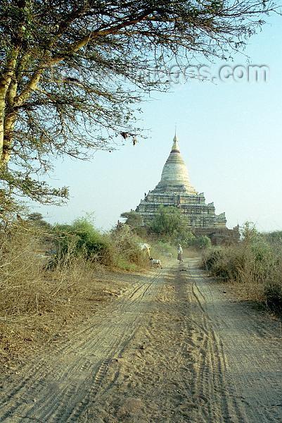 myanmar3: Myanmar / Burma - Bagan / Pagan (Mandalay division): dirt road leading to Shwe-san-daw pagoda - zedi - stupa - religion - Buddhism (J.Kaman) - (c) Travel-Images.com - Stock Photography agency - Image Bank
