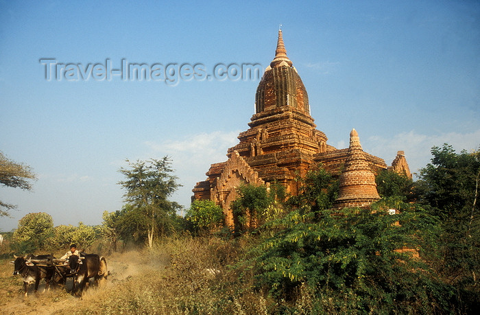 myanmar4: Myanmar / Burma - Bagan / Pagan: oxen and pagoda - dirt road - photo by D.Forman - (c) Travel-Images.com - Stock Photography agency - Image Bank
