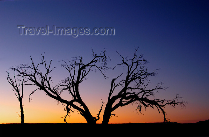 namibia122: Namib desert - Deadvlei - Hardap region, Namibia: Dead tree sillouette at sunset, near Sossusvlei - Namib-Naukluft National Park - photo by B.Cain - (c) Travel-Images.com - Stock Photography agency - Image Bank